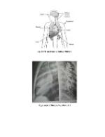 xfs 150x250 s100 page0003 6 Ingrijirea pacientului cu sarcoidoza