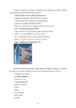xfs 150x250 s100 page0028 0 Ingrijirea pacientului cu pneumonie