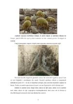 xfs 150x250 s100 page0008 0 Ingrijirea pacientului cu alergii