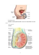 xfs 150x250 s100 page0005 0 Ingrijirea pacientilor cu boli venerice