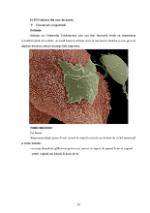 xfs 150x250 s100 page0019 0 Ingrijirea pacientilor cu boli venerice