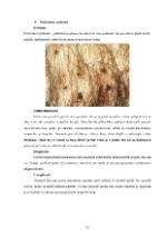 xfs 150x250 s100 page0022 0 Ingrijirea pacientilor cu boli venerice