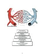 xfs 150x250 s100 TROMBO HEMOROIDALA 34 0 Ingrijirea pacientului cu tromboflebita hemoroidala