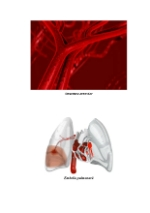 xfs 150x250 s100 page0073 0 Ingrijirea pacientului cu embolie pulmonara