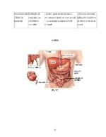 xfs 150x250 s100 INTOXICATIA CU CIUPERCI 44 0 Ingrijirea pacientului cu intoxicatie cu ciuperci