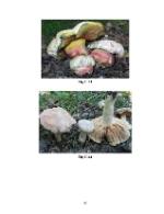 xfs 150x250 s100 INTOXICATIA CU CIUPERCI 45 0 Ingrijirea pacientului cu intoxicatie cu ciuperci