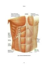 xfs 150x250 s100 page0044 0 Ingrijirea pacientului cu hernie ombilicala