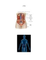 xfs 150x250 s100 page0046 0 Ingrijirea pacientului cu litiaza renala