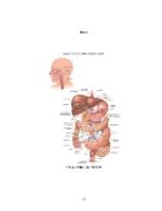 xfs 150x250 s100 page0078 0 Ingrijirea pacientului cu obezitate