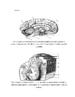 xfs 150x250 s100 page0001 14 Ingrijirea pacientului cu dementa senila