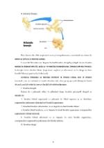 xfs 150x250 s100 page0007 0 Ingrijirea pacientului cu hemoptizie