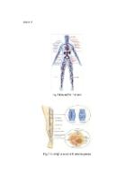 xfs 150x250 s100 page0001 14 Ingrijirea pacientului cu insuficienta venoasa cronica