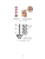 xfs 150x250 s100 page0056 0 Ingrijirea pacientului cu discopatie lombara