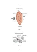 xfs 150x250 s100 page0067 0 Ingrijirea pacientului cu otita externa