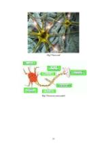 xfs 150x250 s100 page0059 0 Ingrijirea pacientului cu boala Parkinson