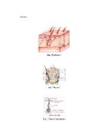 xfs 150x250 s100 page0001 14 Ingrijirea pacientului cu psoriazis