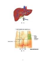 xfs 150x250 s100 page0090 0 Ingrijirea pacientului cu hepatita virala