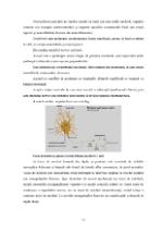 xfs 150x250 s100 page0010 0 Ingrijirea pacientului cu nevroza astenica