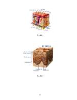 xfs 150x250 s100 VARICELA 37 0 Ingrijirea pacientului cu varicela