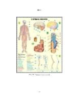 xfs 150x250 s100 page0067 0 Ingrijirea pacientului anesteziat