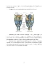 xfs 150x250 s100 page0005 0 Ingrijirea pacientului cu anemie Biermer