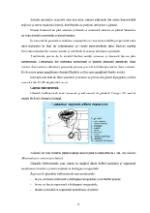 xfs 150x250 s100 page0007 0 Ingrijirea pacientului cu cancer de prostata