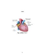 xfs 150x250 s100 page0052 0 Ingrijirea pacientului cu stenoza mitrala