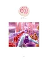 xfs 150x250 s100 page0058 0 Ingrijirea pacientului cu septicemie