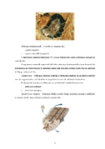xfs 150x250 s100 page0005 0 Ingrijirea pacientului cu osteosarcom