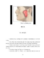xfs 150x250 s100 OREIONUL 33 0 Ingrijirea pacientului cu oreion